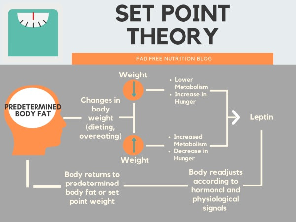 Set point theory model