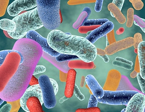 what does a probiotic do?